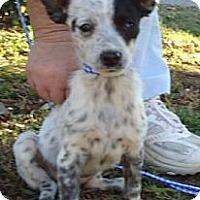 Adopt A Pet :: SOPHIE - Allentown, PA