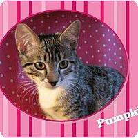 Adopt A Pet :: Pumpkin - Encinitas, CA