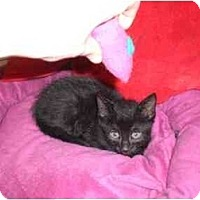 Adopt A Pet :: Chase - Lombard, IL