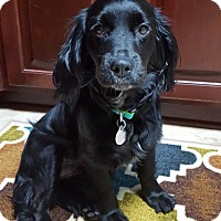 Adopt A Pet :: Willow - Knoxville, TN