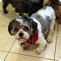 Adopt A Pet :: Landon - Adoption Pending! - Farmington Hills, MI