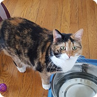 Adopt A Pet :: Stella - Salem, OH