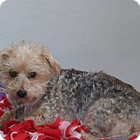 Adopt A Pet :: Peaches - Boise, ID