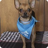 Adopt A Pet :: Taco - Tavares, FL