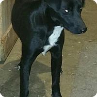Adopt A Pet :: Pilgrim meet me 6/2 - Manchester, CT