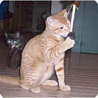 Adopt A Pet :: Helios - Colmar, PA