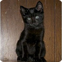 Adopt A Pet :: Bryce - New Egypt, NJ