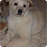 Adopt A Pet :: Valentine - Toronto/Etobicoke/GTA, ON