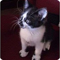 Adopt A Pet :: Clark Kent - lake elsinore, CA