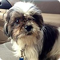 Adopt A Pet :: Tawny - Davie, FL