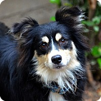 Adopt A Pet :: Mac - Garland, TX