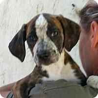 Adopt A Pet :: Jade - Medora, IN