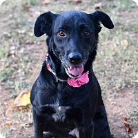 Adopt A Pet :: Bonnie - PORTLAND, ME
