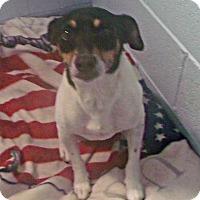 Adopt A Pet :: Dodger - Muskegon, MI