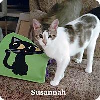 Adopt A Pet :: Susannah - Bentonville, AR