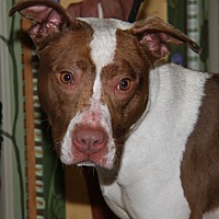Adopt A Pet :: Kelly (Spayed) - Marietta, OH