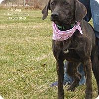 Adopt A Pet :: Bella - Bucyrus, OH