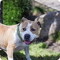 Adopt A Pet :: Blessie - Berkeley, CA