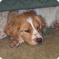 Adopt A Pet :: COLE - Pine Grove, PA