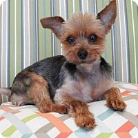 Adopt A Pet :: Luke - Waco, TX