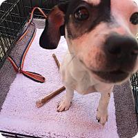 Adopt A Pet :: Jazzy - Houston, TX