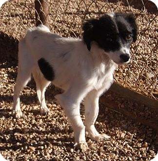 Terrier (Unknown Type, Small) Mix Dog for adoption in Post, Texas - Annie