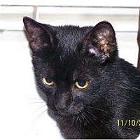 Adopt A Pet :: Sabastian - Riverside, RI