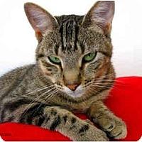 Adopt A Pet :: Clove - El Cajon, CA