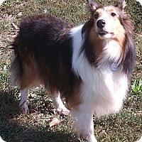 Adopt A Pet :: Molly - Pending - Abingdon, MD