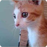 Adopt A Pet :: Levi Loewenstein - Erie, PA