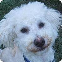 Adopt A Pet :: Danny - La Costa, CA