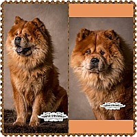 Adopt A Pet :: Milo - Tucker, GA