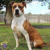 Adopt A Pet :: Precious - Sebastian, FL