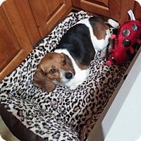 Adopt A Pet :: Zoey Hughes - Waldorf, MD