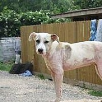 Adopt A Pet :: Olive - Hankamer, TX