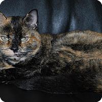 Adopt A Pet :: Birdie - New Castle, PA