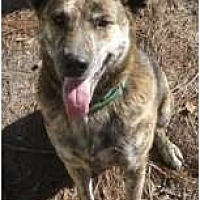 Shepherd (Unknown Type) Mix Dog for adoption in Winnsboro, South Carolina - Angel