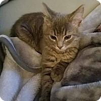 Adopt A Pet :: Murphy - Winchester, VA