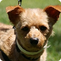 Adopt A Pet :: Red - Carlsbad, CA