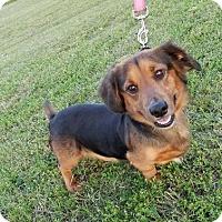 Adopt A Pet :: Sheldon - Somers, CT