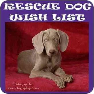 Weimaraner Puppy for adoption in Las Vegas, Nevada - LVWCR WISHLIST