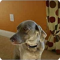 Adopt A Pet :: Faith - Attica, NY