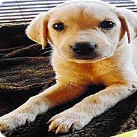 Adopt A Pet :: JUDY - San Diego, CA