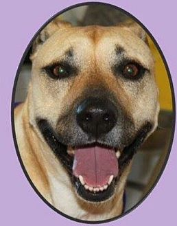 Shepherd (Unknown Type) Mix Dog for adoption in Mineral Wells, Texas - Bella