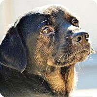 Adopt A Pet :: Roscoe - Lincolnton, NC