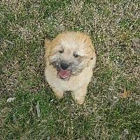 Adopt A Pet :: Taffi - Cleburne, TX