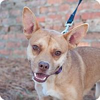 Adopt A Pet :: Adalina - Atlanta, GA