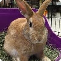 Adopt A Pet :: Benjamin - Woburn, MA