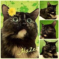 Adopt A Pet :: Hazel - Tucson, AZ