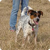 Adopt A Pet :: Chico - Cameron, MO